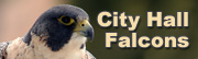 City Hall Falcons